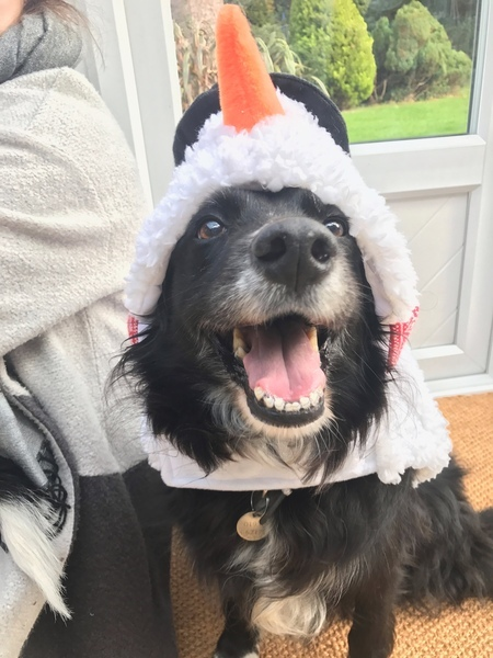 Pup Christmas Treat