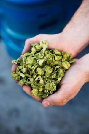 History of Hops