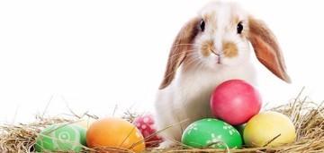 Easter Sunday egg decorating